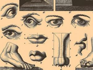 partes del cuerpo diccionario